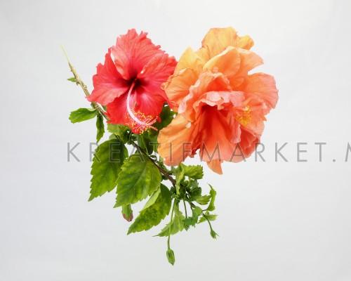 Red Orange Hibiscus Flower