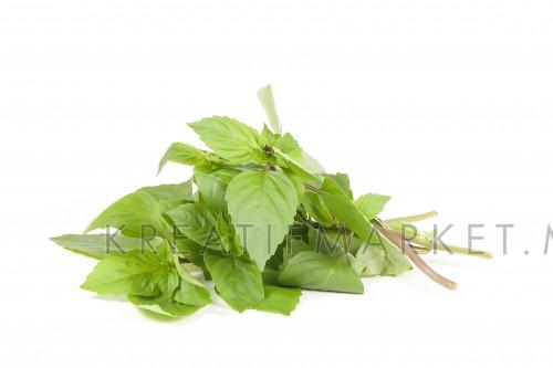 Green Thai Basil fragrant leaf  W04DEC18