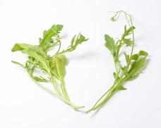 Wild Rocket Leaf Herb fragrant seasoning salad