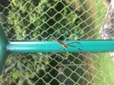 Unique Spider