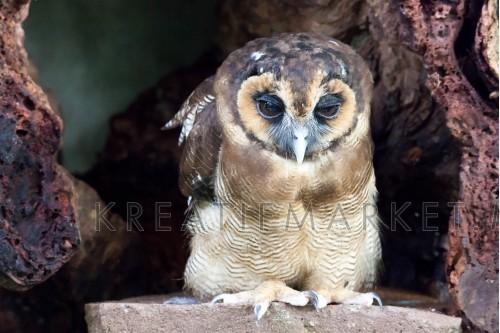 Bird,Owl,