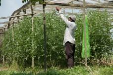 Organic farm, Bukit Tinggi Malaysia