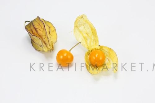 Yellow orange gooseberry golden berry