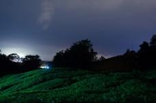 Tea Plantation At The Night Hour