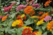 Colored Petals