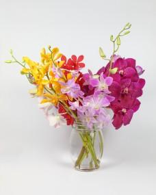 Colorful Orchid Flower W04DEC18