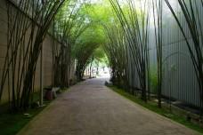 Pokok Buloh sepanjang pejalan kaki