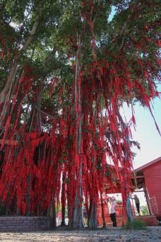 the famous wishing tree of Sekinchan