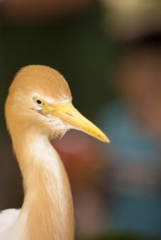 Staring bird