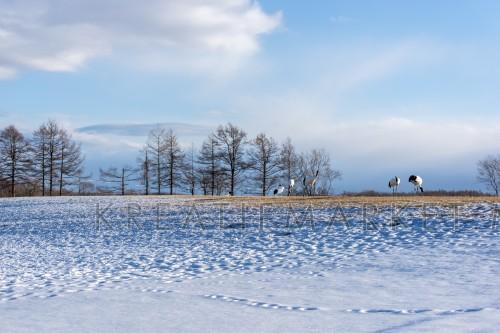 Winter scene of Hokkaido, Japan